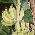 She Has Gone Bananas by Karen Richardson