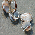 She Sells Sea Shells by Suzanne Gaff