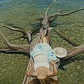 She Slept Like A Log by Holly Kallie