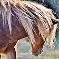 She Tossed Her Mane - Wild Pony Of Assateague by Kim Bemis