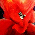 She Wore Red Ruffles by Gail Kirtz