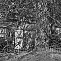 Shed Bw by Timothy Hacker