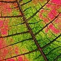 Shed Foliage by Chris Berry
