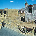 Sheep And Shepherd Along The Road To Shigatse-tibet by Ruth Hager