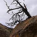 Sheep Creek Canyon Wyoming 10 by Rachel  Butterfield