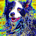 Sheep Dog 20130125v1 by Wingsdomain Art and Photography