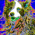 Sheep Dog 20130125v3 by Wingsdomain Art and Photography