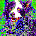 Sheep Dog 20130125v4 by Wingsdomain Art and Photography