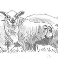 Sheep Drawing by Mike Jory