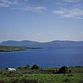 Sheep Grazing By The Irish Sea - Donegal Ireland by Bill Cannon