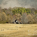 Sheep In The South by Jai Johnson