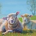 Sheep Lying Down by Mike Jory