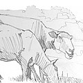 Sheep Pencil Drawing  by Mike Jory
