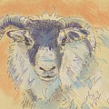 Sheep With Horns by Mike Jory
