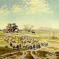 Sheepherding Montana by Olaf Seltzer