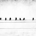 Sheet Music by Jeffrey Hummel