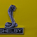 Shelby Gt350 Emblem On Yellow by Eti Reid