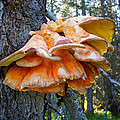 Shelf Fungus In Carl E. Wynn Nature Center In Homer-ak   by Ruth Hager