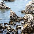 Shell Beach Rocky Coastline by Baarbara Snyder