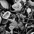 Shell Collection 3 by Matt Johnson