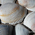 Shell Effects 5 by Michael Anthony