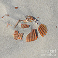 Shell Jigsaw by Meandering Photography