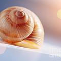 Shell by Konstantin Sutyagin