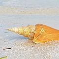Shell On Beach by Carol McGunagle