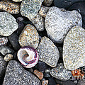 Shell On The Shore 1 by James Brunker