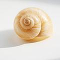 Shell On White by Konstantin Sutyagin