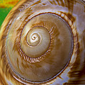 Shell Spiral by Garry Gay
