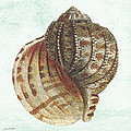 Shell Treasure-c by Jean Plout