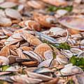 Shells by Alex Hiemstra