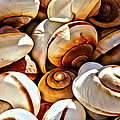 Shells Galore by Alice Gipson