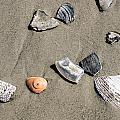 Shells by George Fredericks