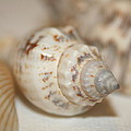 Shells by Rob Cruise
