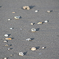 Shells On A Beach by Catie Canetti