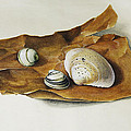 Shells On Paper by Horst Braun