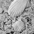 Shells One by Diane Phelps
