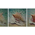 Shells Triptych by Don Young