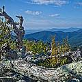 Shenandoah Vista by Jemmy Archer