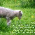 Shepherd by Angelina Vick