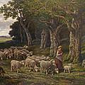 Shepherdess And Her Flock by David Lloyd Glover