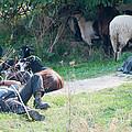 Shepherd's Rest by Roy Pedersen