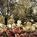 Sherwood Gardens 7 by Chris Scroggins