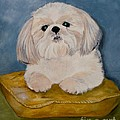 Shihtzu by Graciela Castro