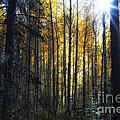 Shining Through by Belinda Greb