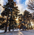 Shining Through by Mark Papke
