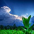 Shining Through by Ryan Crane