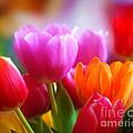Shining Tulips by Lutz Baar